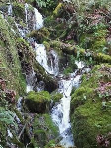 Waterfall in Renton